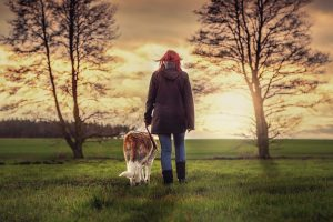 Regular walks will help your pet with dealing with moving stress.