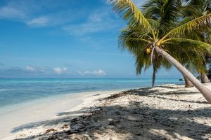Where to retire? Maybe at the beach, under the palm.