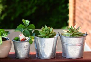 Plants in pots you can use to grow an eco-friendly balcony